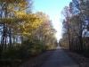 December color - 4