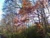 December color - 5