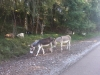 Donkeys on the Trail